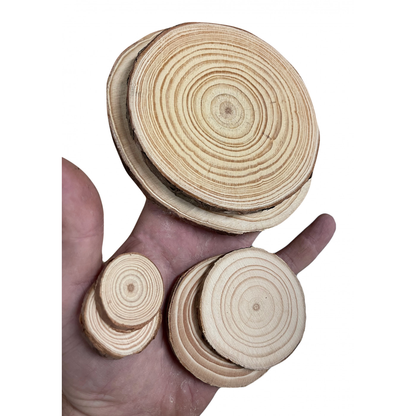 Set of 50 slices of wood (dia: 3-4 cm, thickness: 5 mm)